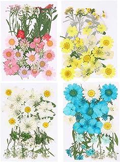 HEALLILY 33 Pcs Mixte Fleur Séchée Réel Pressé Fleur Plantes Spécimen Gaufrage Art Artisanat Fleur Séchée Pour La Maison B...