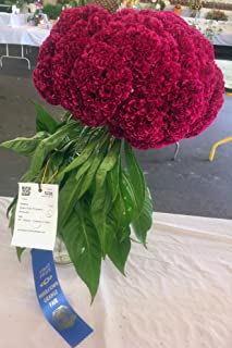 Giant Red Celosia Cockscomb from Monticello Premium Seed Packet