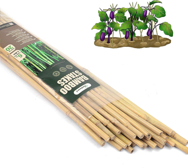 Cambaverd 20 Pcs Max 75% OFF Natural Austin Mall Bamboo Eco-Friendly 6 Feet Bambo Stakes