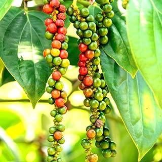 Best black pepper vine Reviews