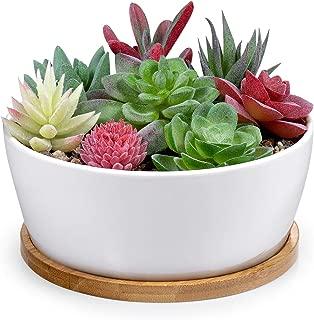 Best jade cactus plant Reviews