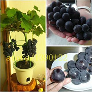 grape bonsai