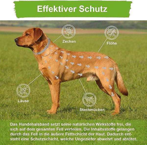 Zeckenhalsband-Hund