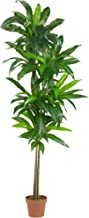Nearly Natural 6596 6ft. Dracaena Silk Plant (Real Touch)