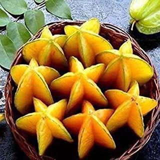 Bluelans 50Pcs Fruit Seeds Thai Star Carambola Exotic Tree Seeds 100% Non-GMO Garden Top Gardening Gift, Holiday Gift, Unique Gift