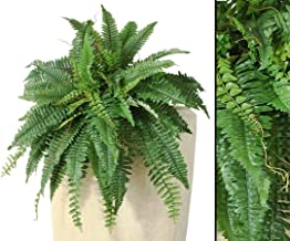 Agave Art/'s Schwertfarn 45 cm Boston Fern//Farn, Kunstpflanze Nephrolepis exaltata