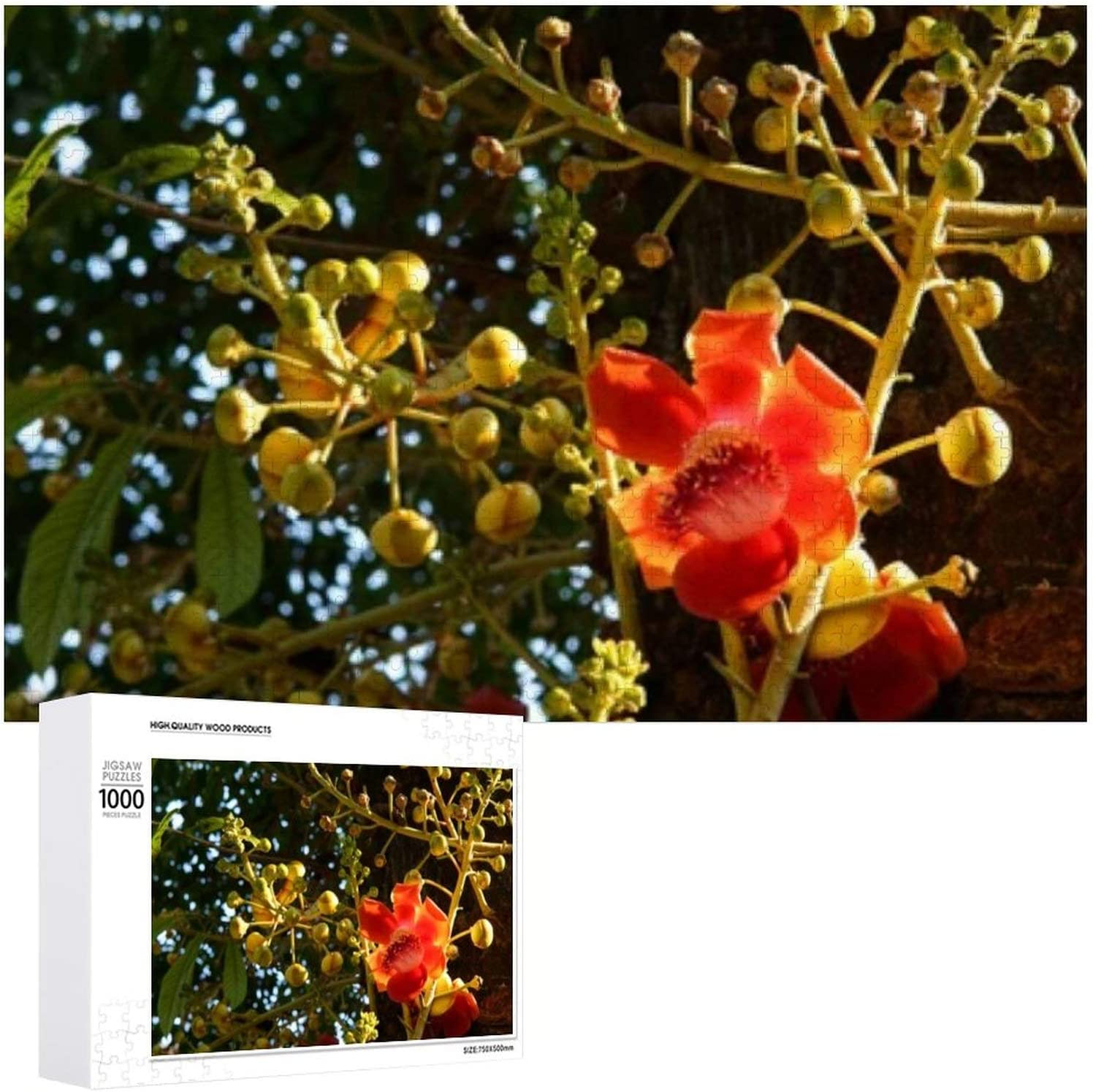 New item Beautiful Fresh Sal Flowers Cannonball 5 Direct sale of manufacturer 1000 Puzzles Jigsaw -