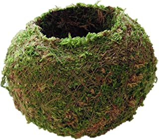 F Fityle Japanese Style Natural Moss Ball Bonsai Flower Plant Pot, Green Sphagnum Moss Substrate Plant Potted Hydrating Fl...