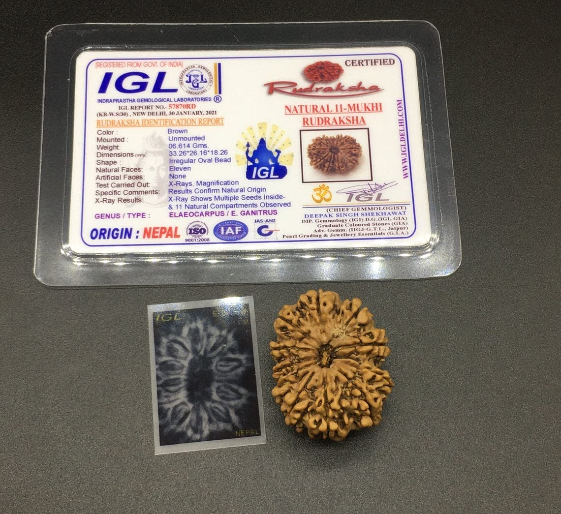 11 Outlet sale feature Mukhi Nepal Rudraksha 33.26mm Eleven Hanu Face 6.61Gms Lord At the price of surprise