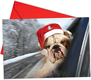 12 'Dog in Window Bulldog Boxed Christmas' Greeting Cards with Envelopes 4.63 x 6.75 inch Happy Holiday Note Cards with an Adorable Puppy Snuggling a Stuffed Animal, Boxed Xmas Stationery B6481FXSG