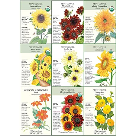 """Botanical Interests """"Sunflower Delight"""" Flower Seed Collection - Nine (9) Packets with Gift Box"""