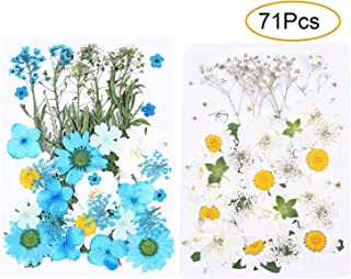 GOTONE 71 PCS Natural Dried Flowers Pressed Mixed Multiple Real Pressed Daisies Flowers Assorted for Scrapbooking DIY Cand...