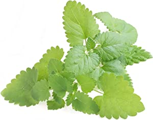 NatureZ Edge Catnip Seeds for Planting, 1700+ Herb Seeds, Indoor or Outdoor Growing, Your Cat Will Love Them, Non-GMO