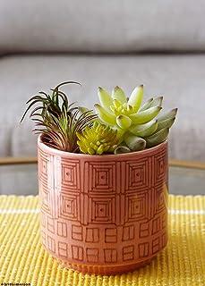 "Afloral Dark Pink Ceramic Pepe Geometric Flower Pot - 4.5"" Tall"