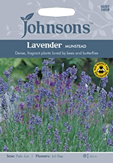 JOFL 英国ジョンソンシード Lavender Munstead Strain ラベンダー・ムンステッド・ストレイン