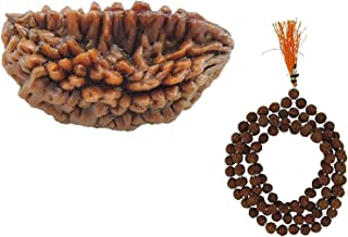 Yuvi Shoppe Original & PureNatural Ek Mukhi Rudraksha With Freebie Five Mukhi Rudraksha Mala (Fast Delivery)