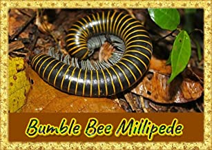 Best giant millipede for sale Reviews