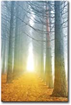 Alva443Anne Landscape Of Autumn Forest Path With Sun Rays Sunshine In Misty Morning Warm Yellow Fallen Leaves Metasequoia ...