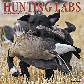 labs hunting pheasants