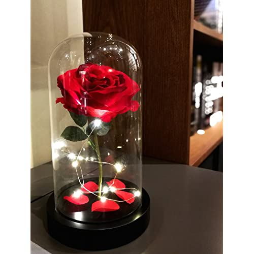 Beauty And Beast Rose Amazoncom