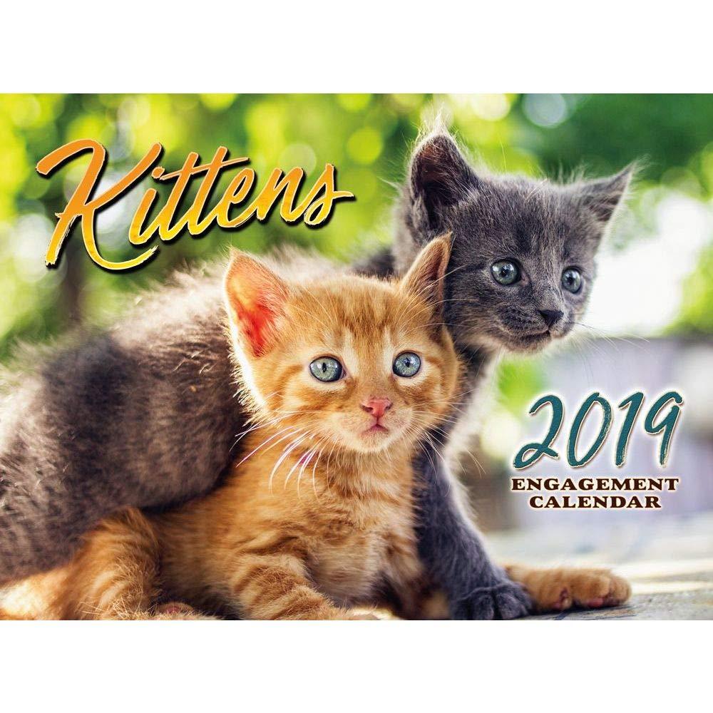 2019 Kittens 2019 - Calendario de pared, diseño de gatitos: Amazon.es: Oficina y papelería