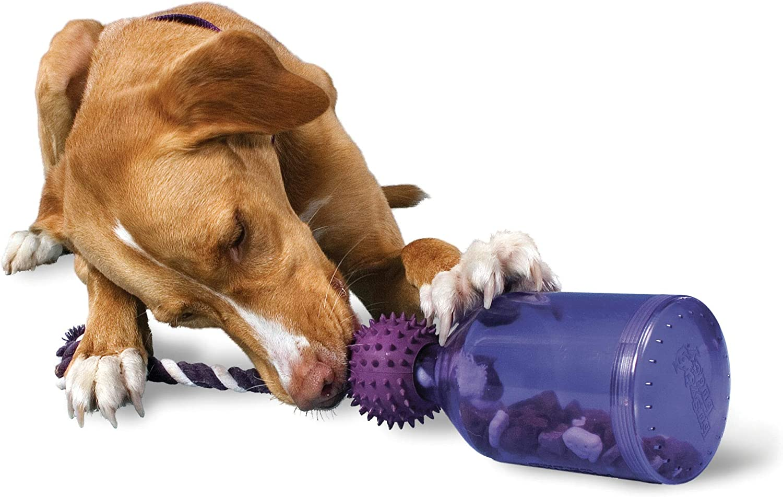Premier Pet PetSafe Busy 5% OFF Colorado Springs Mall Buddy - Meal-Dispensing Dog Tug-A-Jug T