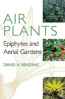 epiphyte terrarium