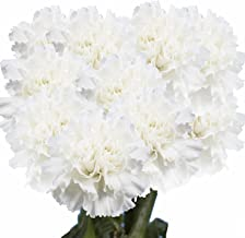 GlobalRose White Carnations - 100 Fresh Cut Flowers- Express Delivery
