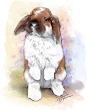 Best images of holland lop bunnies Reviews