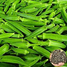 100 Semillas-Abelmoschus esculentus- By Samenchilishop Okra verde