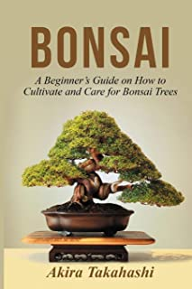 ficus bonsai care for beginners