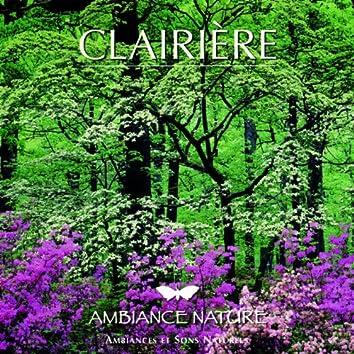 Ambiance Nature Clairière