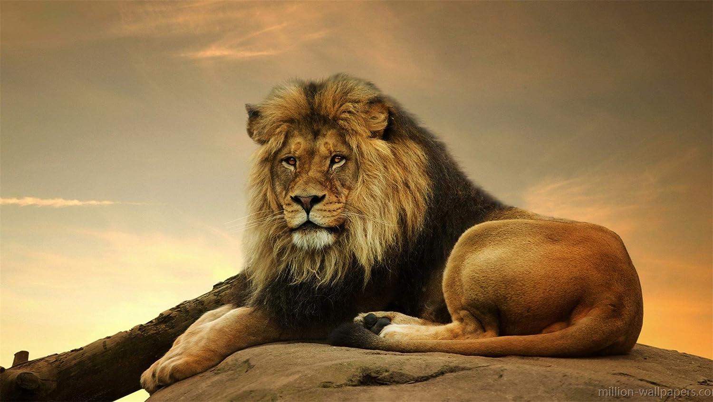 ganancia cero ClassicJP Jigsaw Jigsaws 1000 Piece Piece Piece Animals, Cat, Lion For Adult Friend  orden en línea