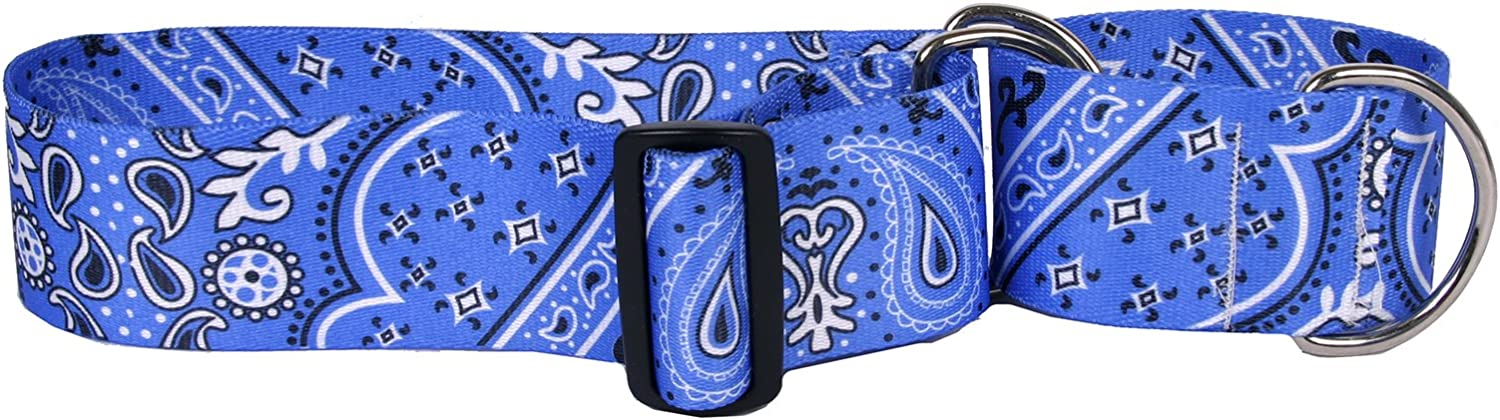 Hot Spring new work one after another Dog Ranking integrated 1st place Collars 2'' Wide Collar Martingale