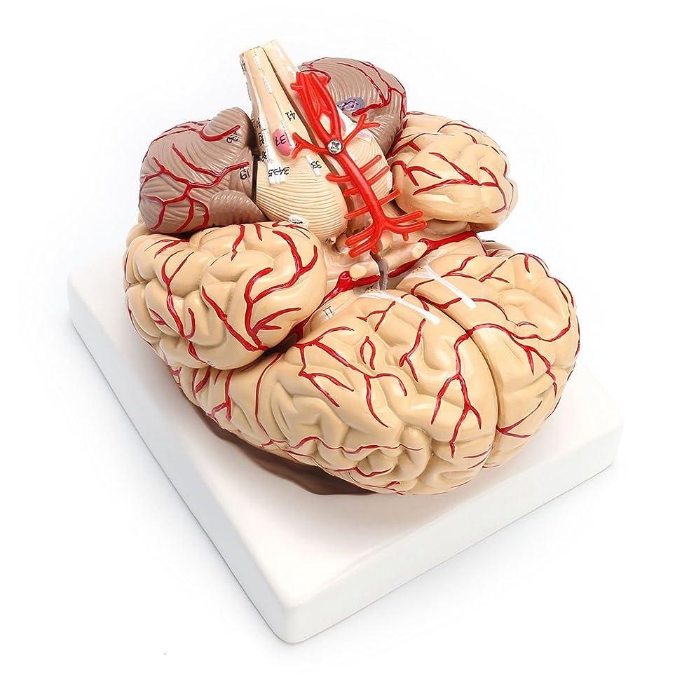 里親珍しい叙情的なSemoic 1:1ライフサイズ人間の解剖学的脳解剖医療機関、教授モデル