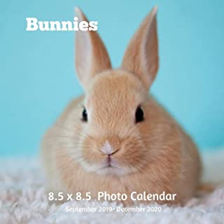Bunnies 8.5 X 8.5 Calendar September 2019 -December 2020: Monthly Calendar with U.S./UK/ Canadian/Christian/Jewish/Muslim Holidays-Cute Rabbits Pets