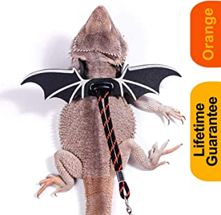 Best full grown bearded dragon on leash Reviews
