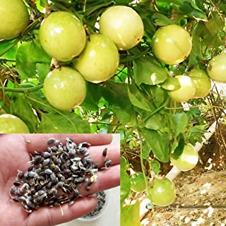 Best golden passion fruit Reviews