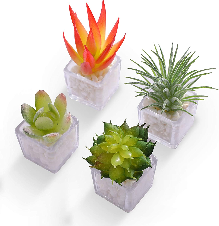 HEY FOLY Cactus Succulent Refrigerator Magnet Cute 3D Mini Plant Fridge Magnets Decoration Kitchen,House,Office,Whiteboard (Cactus)
