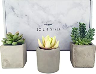 Soil & Style 3 Fake Succulent Plants in Pot - No Green Thumb Required - Faux Succulents Potted - Handcrafted Cement Pots - Miniature Fake Plants for Decoration - Realistic Fake Cactus
