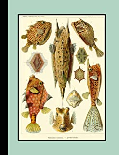 Vintage botanical illustration Journal: Ernst Haeckel - Ostraciontes fish - The large botanical journal for the marine lif...