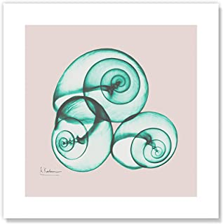 Best snail x ray Reviews
