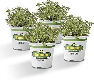 Best lemon thyme plant Reviews