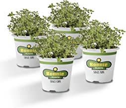 Best bonnie seeds and plants Reviews
