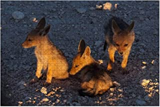 Wooden Puzzle 1000 Pieces Young Jackal Cubs in Twilight Etosha National Park Namibia Jigsaw Puzzles for Children or Adults...