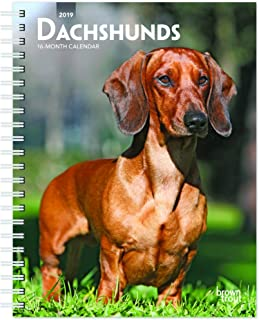 Dachshunds 2019 6 x 7.75 Inch Weekly Engagement Calendar, Animals Dog Breeds (Multilingual Edition)