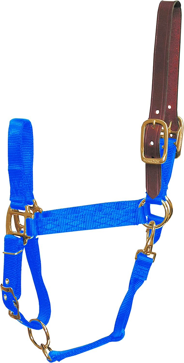 Hamilton 1Inch Nylon Adjustable Horse Halter with Leather Head Poll and Throat Snap, Large, blueee