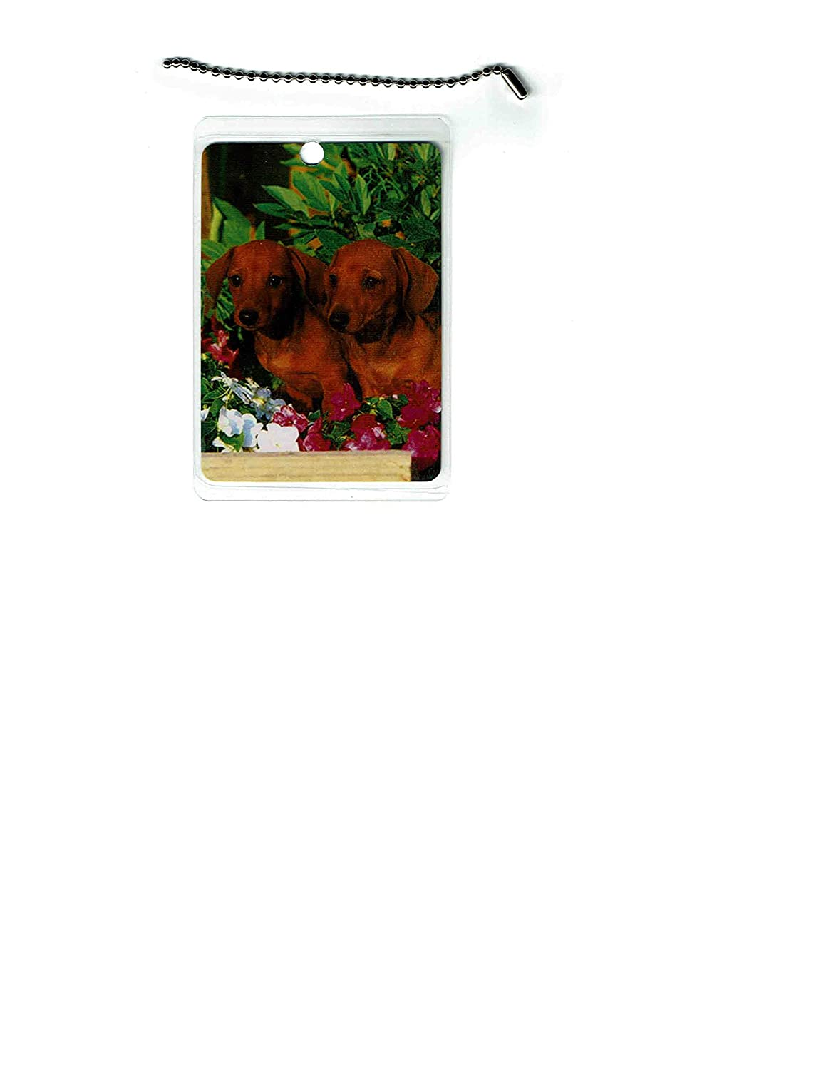 Excellent Dachshund Dog Tag Japan's largest assortment Luggage