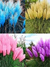 200pcs Pampas Grass Seeds Ornamental Plant Seeds Garden Yard Growing DIY Home Décor