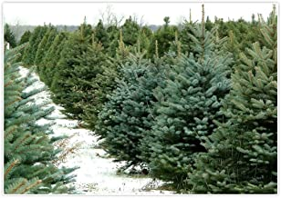 Allenjoy 7x5ft Christmas Tree Farm Winter Green Pine Backdrop for Studio Photography Picture Holiday Xmas Snow Background Home Decor Newborn Party Decoration Family Portrait Photo Shoot Props Supplies